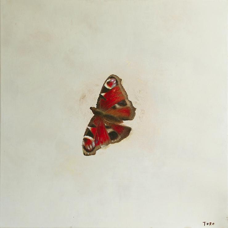 Butterfly Solo_S_60x60cm
